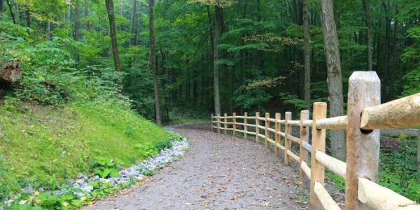 gravel pathway with wooden fence in trees